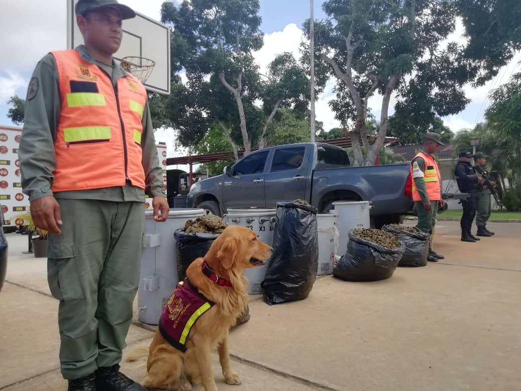 Incautados 182,77 kilogramos de marihuana ocultos en cuatro transformadores eléctricos en Anzoátegui (17)