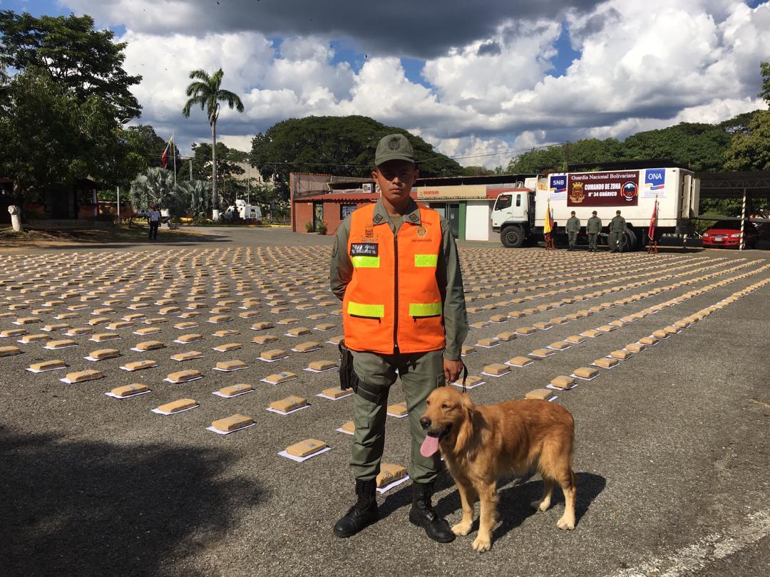 GNB incautó mil 594 panelas de marihuana en Guárico (10)